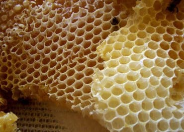 ASMR honeycomb eating – a strangely popular ASMR trigger in 2019